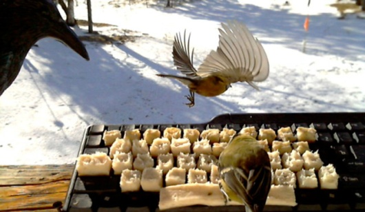 Twitter-birds 1